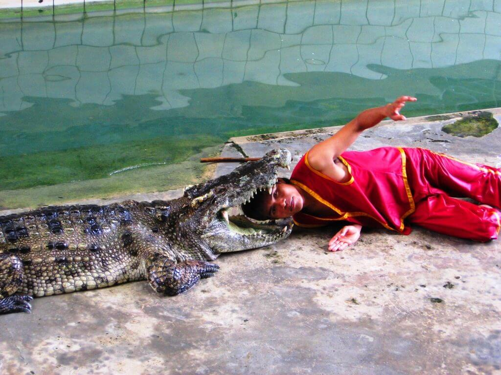7-Боягузи-дружать-з-крокодилами-1024x768