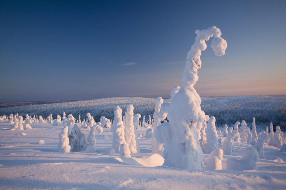 4342805-R3L8T8D-1000-frozen-forest-finland-woe1-1050x700