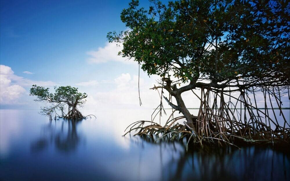 7272210-1000-1457706132-Everglades-USA (1)