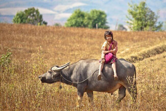 8531760-R3L8T8D-650-children-going-to-school-around-the-world-24