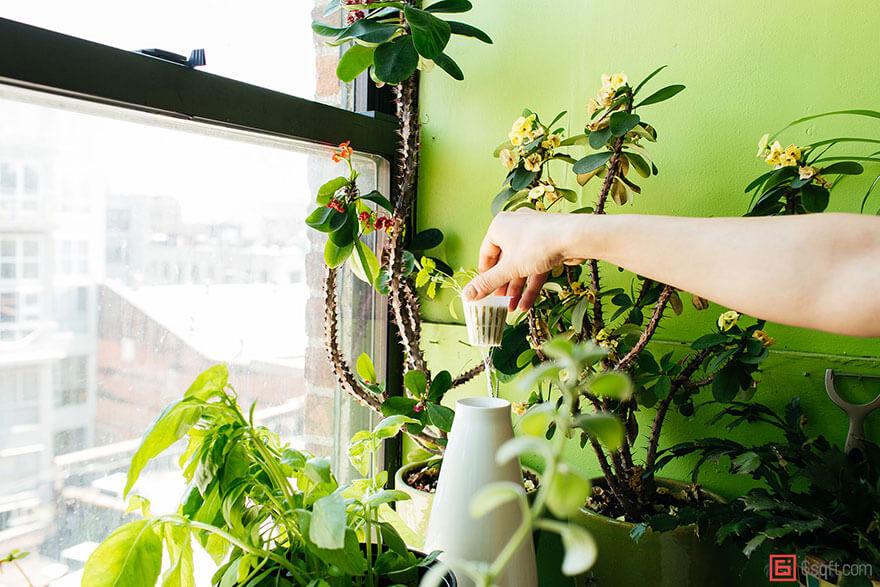 jungle-apartment-plants-summer-rayne-oakes-13